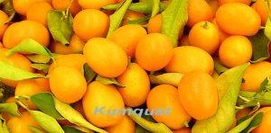 alemonde Kumquat_DC_t_800