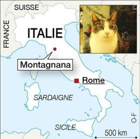 R gne animal italie le chat qui visite son ma tre au cimeti re r sistance inventerre - Chat qui dort sur son maitre ...