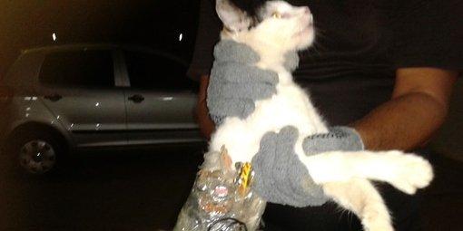atv5monde-chat-transportait-dans-un-sac-attache-sur-lui-tout-le_502808_510x255