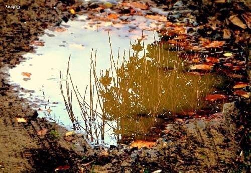 haiku flaque Trou-d-eau