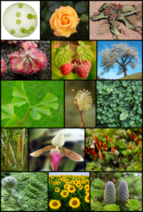 230px-Diversity_of_plants_image_version_3