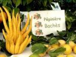 acitron Pépinières Bachès