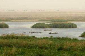 alemonde hawizeh-marsh-09.jpg Irak