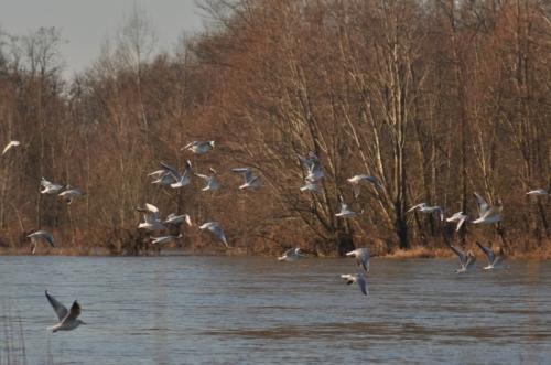 aloireoiseaux en Loire