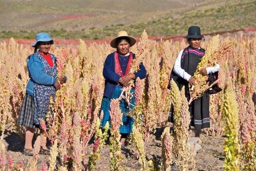 atv5-quinoa2