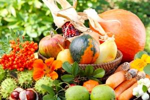 automne_aliments_c_fotoknips_-_300_200