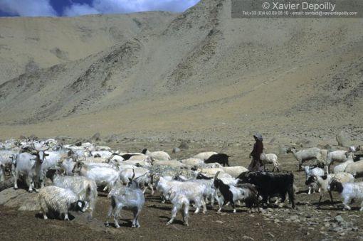 achèvres himalaya 2