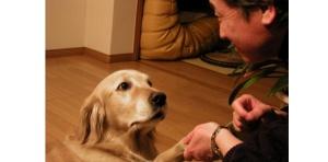 amizubayashi-pour-l-amour-d-une-chienne
