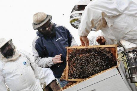 afrelon abeilles sous surveillance