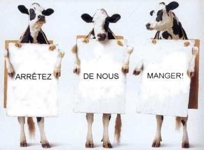 avégétarien vaches