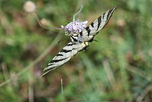 butterfly-copie-1