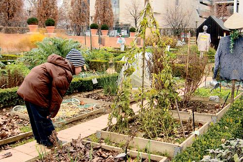 amaison jardinage