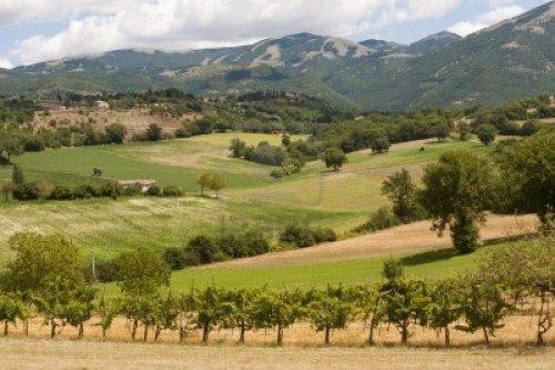 aombrie-paysage-entre-le-latium-et-de-l-39-ombrie-a-ete