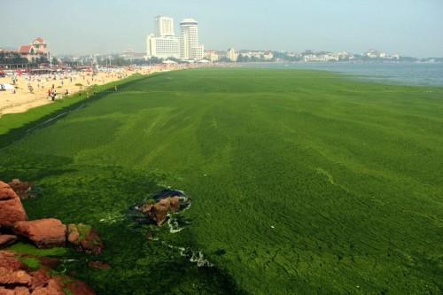 alemonde chine algues