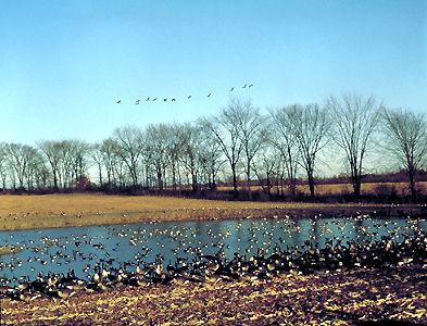 acanadamigratory-bird-sanctuary-1771