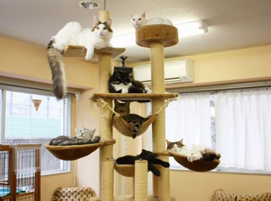 iiie arrondissement de paris premier caf des chats en. Black Bedroom Furniture Sets. Home Design Ideas