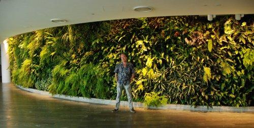Botanique patrick blanc et ses murs v g taux embrassement vert se jouant des fronti res et - Immeuble vegetal ...