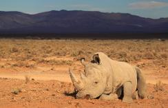 atv5monde rhino