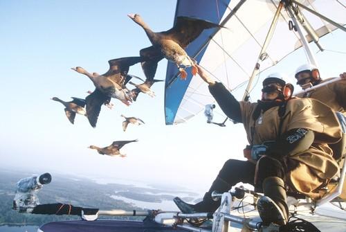 achristian moulec oiseaux