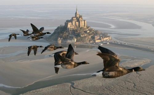 achristian_moullec_bernaches_et_Mont-Saint-Michel1