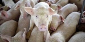 ano24-intellectuels-reclament-un-nouveau-regime-juridique-pour-les-animaux