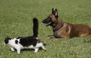 atv5monde chien chat