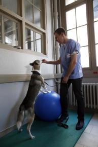 atv5un-chien-fait-des-exercices-avce-un-ballon-a-maisons-alfort_983530_193x290p