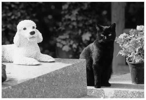 acimetière chien chat