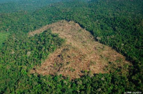 adeforestation
