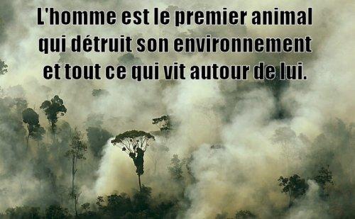 adeforestation4