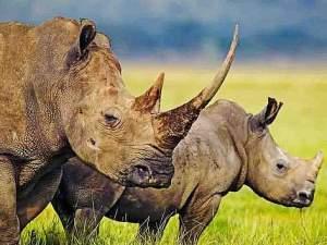 arhinoceros_kenya_800x600_8822