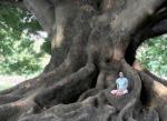 asilence_zen_arbre