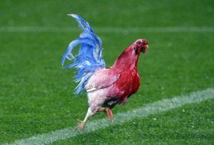 612216-security-guards-chase-a-rooster-in-national-colours-of-france-before-france-play-new-zealand-s-all-b
