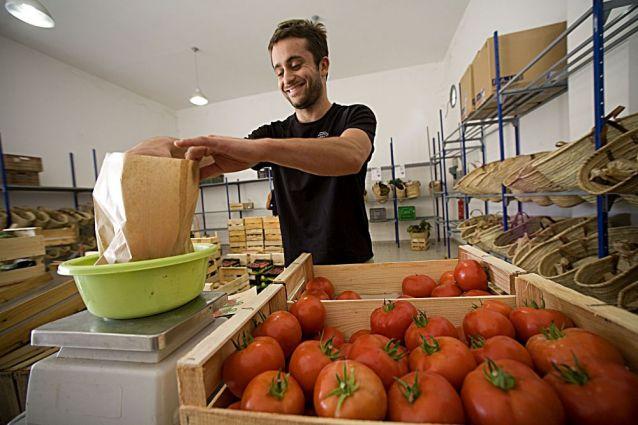 699-livraison-de-paniers-de-tomates-bio-en-645x425-2