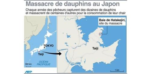 acarte 6864947-baleines-dauphins-sea-shepherd-traque-les-pecheurs-japonais