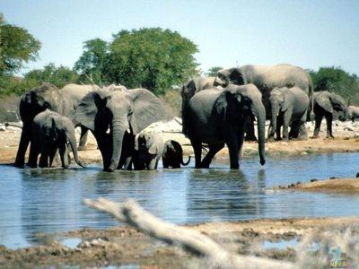 acote d ivoire groupe élé