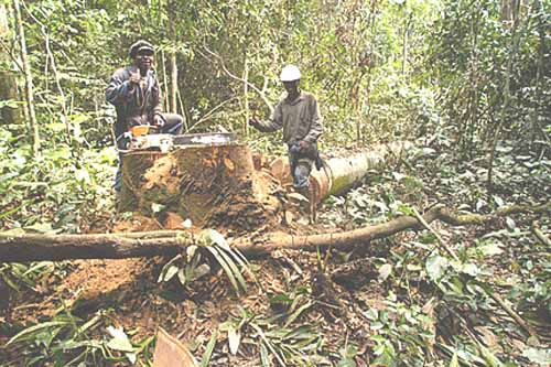 rainforest Africa logging