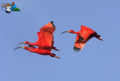 aibis-rouge7-big