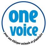 aOne-Voice-bleu