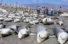 apérou massacre