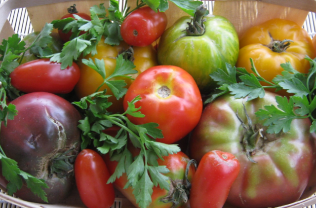 tomates-bio_copie
