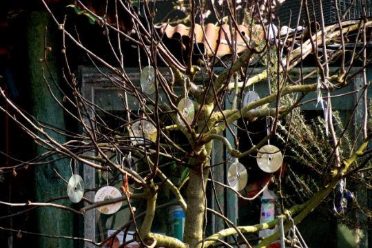 1188951-arbre-a-cd