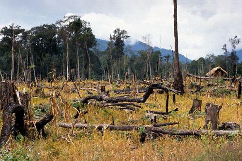 agogledeforestation