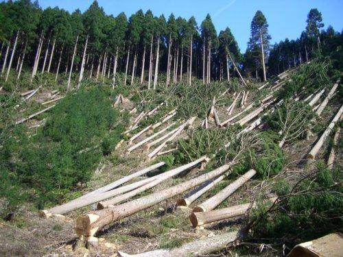 agoogle déforestation
