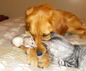 animaux chien chat souris