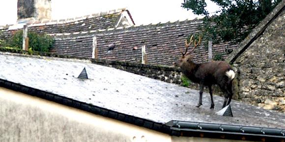 acerf sur le toit779164