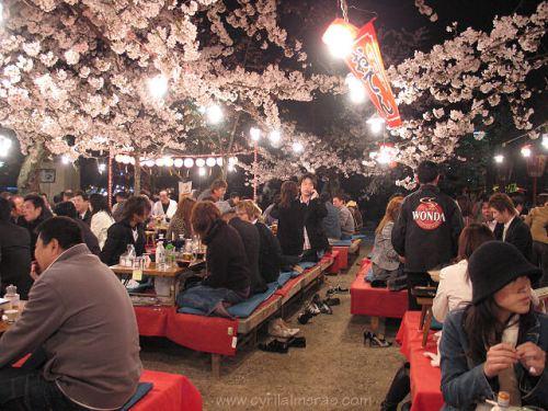 ajapon cerisiersmaruyama_fete_cerisiers_en_fleurs