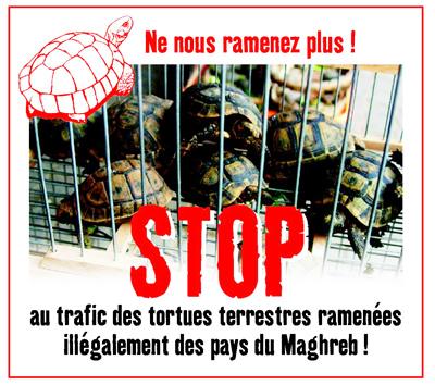 atortuestop_maghreb_web