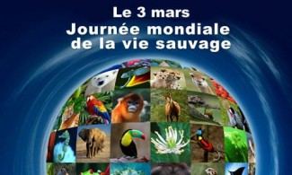 journee-mondiale-de-la-vie-sauvage_photo