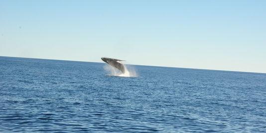 alemonde-baleine-a-bosse-au-large-de-la-gold-coast_6c400eab1d00f738d0f6ce3f0c17b350